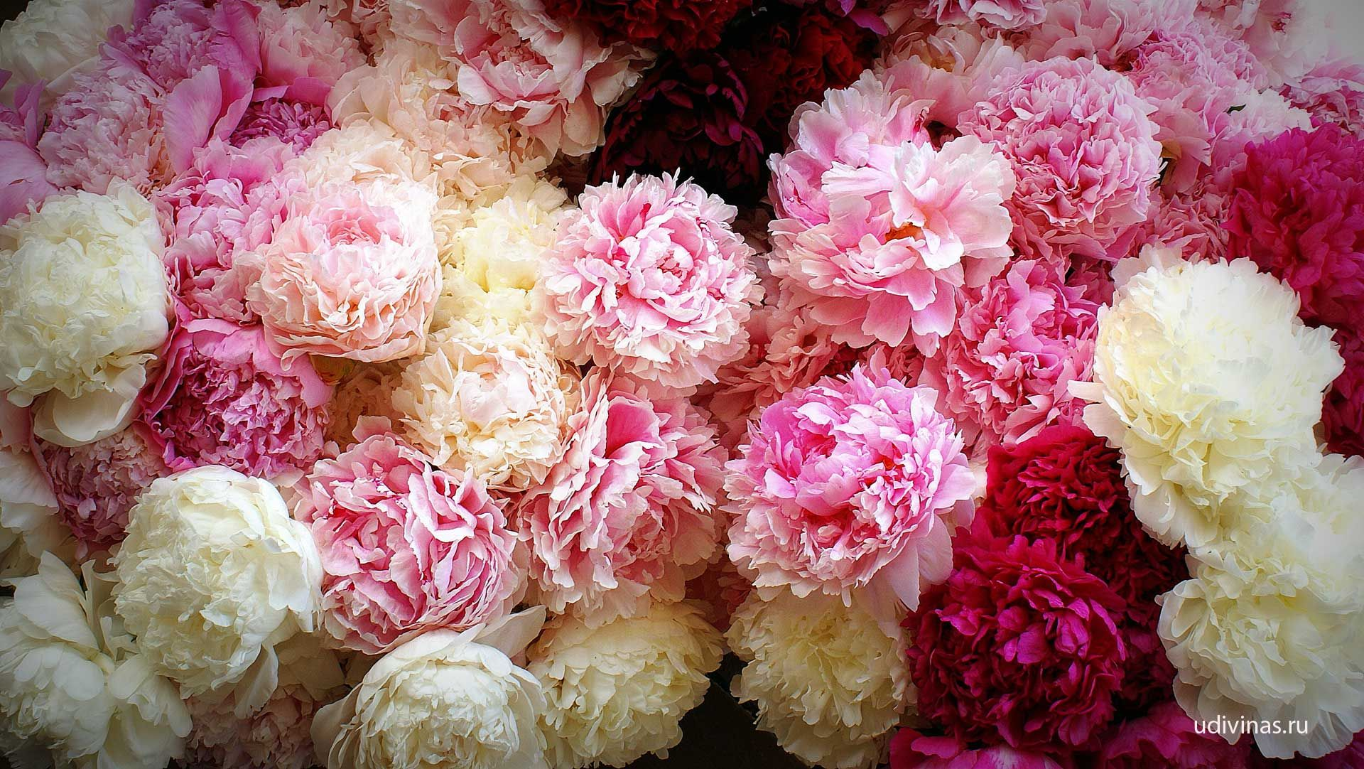 BLOOMING_BOUQUET.79583